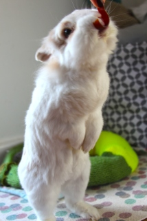 Dudley the rabbit